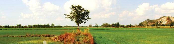 Tailandia sostenible